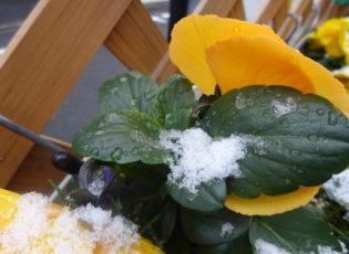 雪が降りました☃(皆様体調は大丈夫でしょうか)