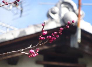 春が来ています🐦