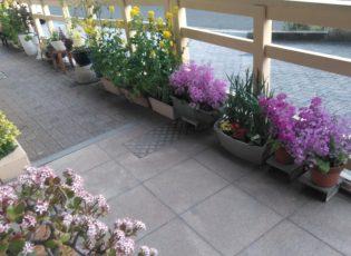 屋上庭園にてハーブ栽培